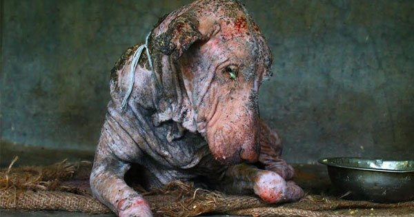 Dying Dog Found On Street Is Completely Transformed In Two Months
