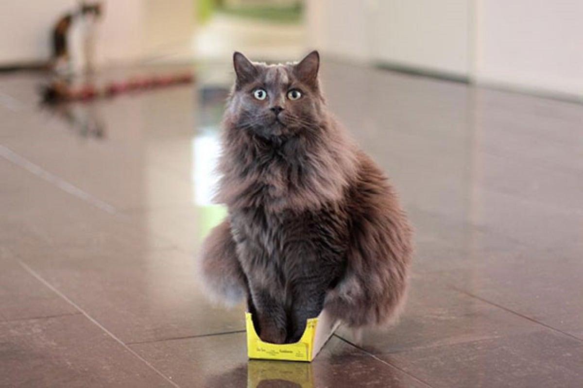 20 Brilliant Examples of Cat Logic