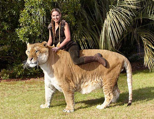 15 incredibly huge animals that actually exist 30