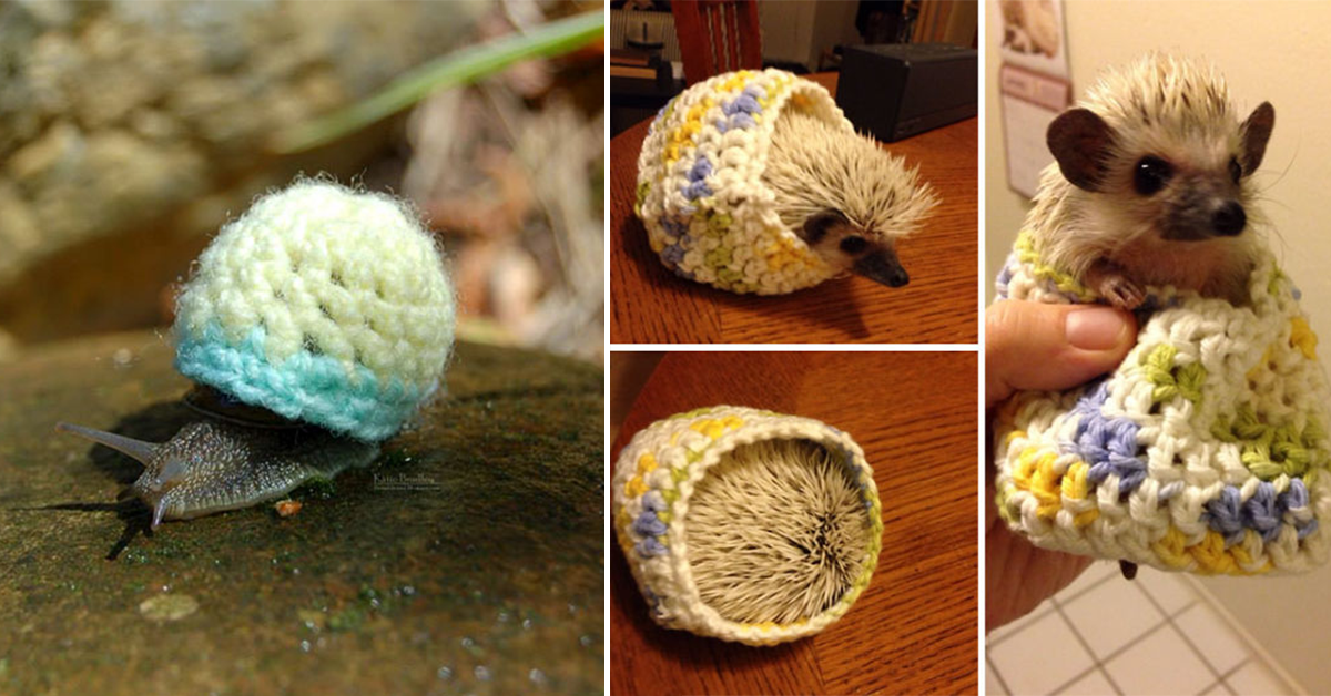 15 Tiny Animals In Tiny Jumpers To Make Your Day!