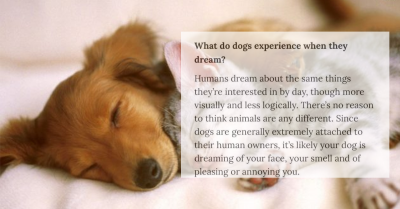 Expert Says Dogs Are Likely Dreaming About Their Owners & People Can't Handle The Cuteness!