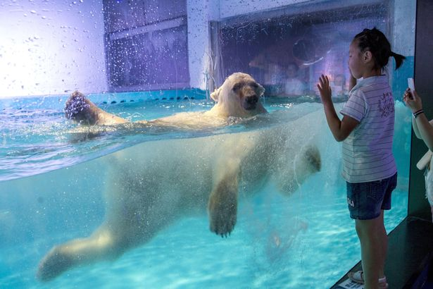 The World's Saddest Polar Bear Is Getting A New Home!
