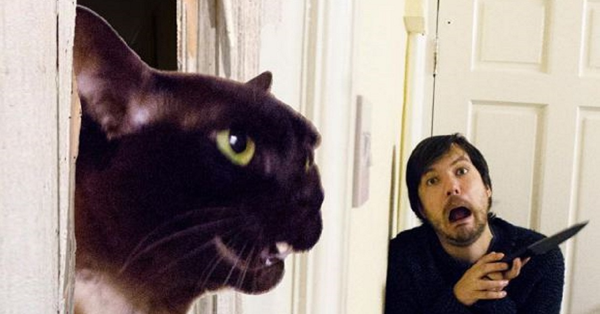 This Couple Recreate Iconic Movie Scenes…WITH CATS!