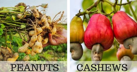 20 Foods That Grow In Strange Ways
