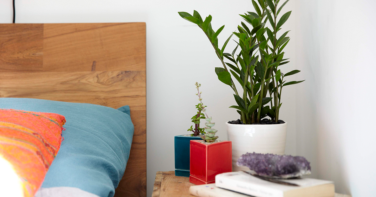 10 Plants With Remarkable Health Benefits That You Need In Your Bedroom According To NASA