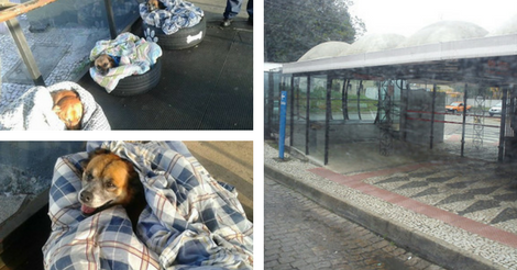 This Bus Shelter Provides Beds And Blankets For Stray Dogs