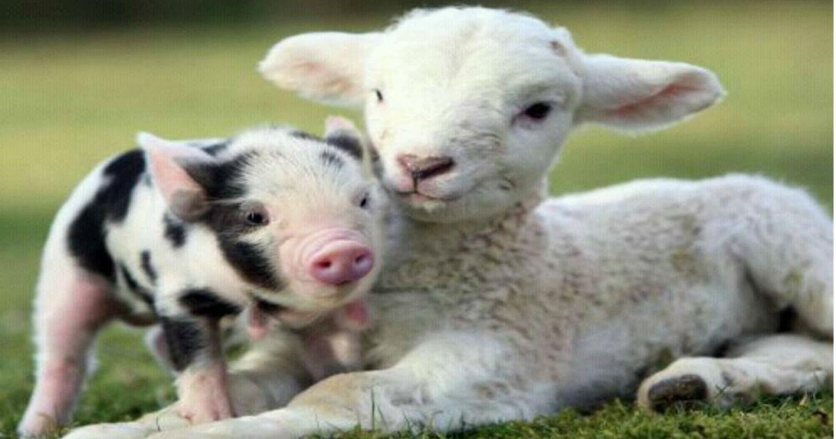 Top 15 Cutest Farm Animals
