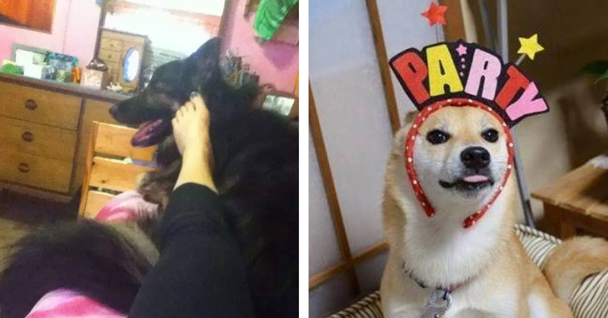20 Things Every Dog Owner Secretly Does But Would Never Admit to