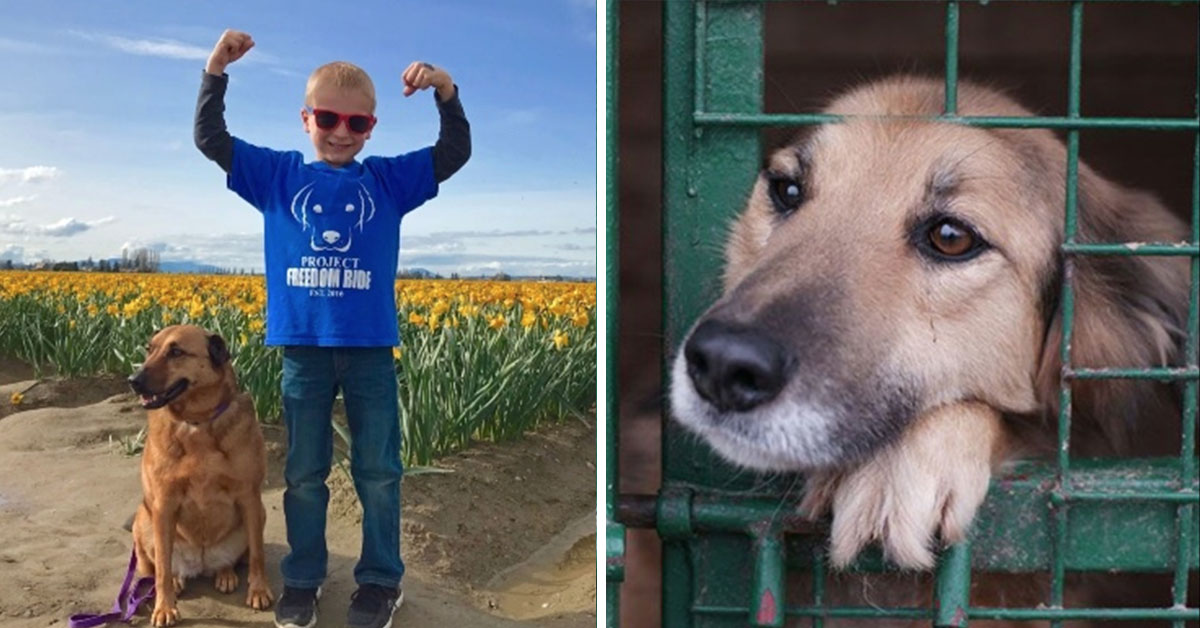A 7-Year-Old Has Spent The Last 2 Years Saving The Lives Of Over 1,200 Dogs