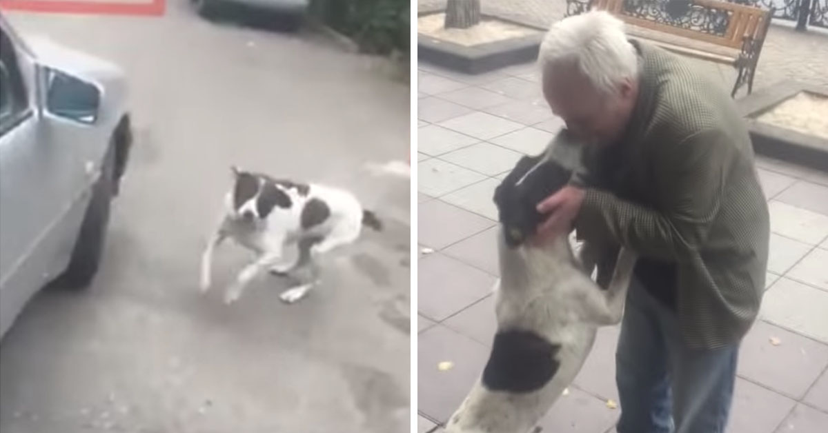 Man Finds His Dog Homeless On The Street After 3 Years Of Searching For Him