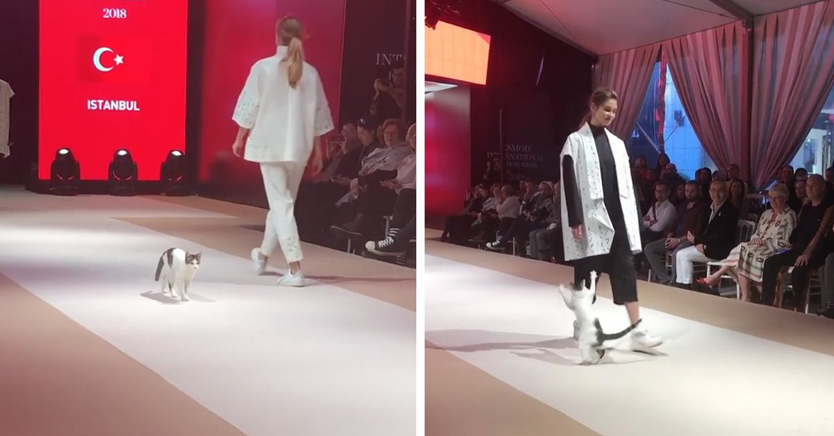 a8ede8ee62 Kitty s Gone Wild  Cat In Turkey Gate Crashes Fashion Show And Starts  Picking Fights With All The Models