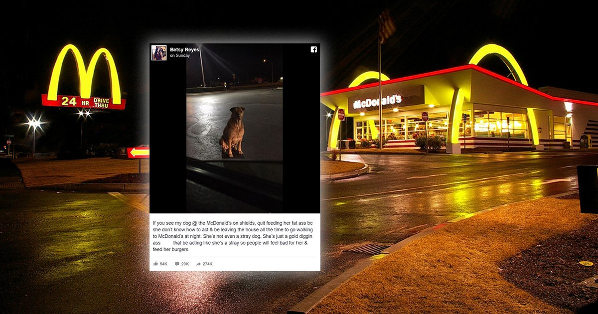 Owner Catches Dog Pretending To Be Stray For Scraps In McDonalds Parking Lot