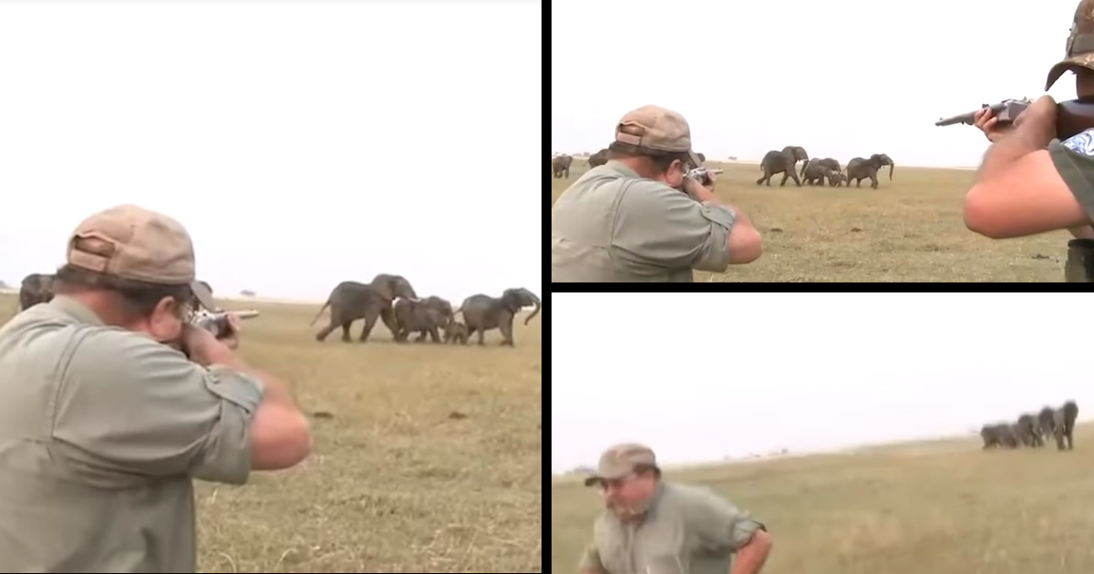 Elephants Charge Two Hunters After They Shoot One Of Their Herd