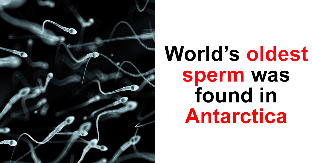 20 INSANE Facts About Antarctica That I Promise Are 100% TRUE