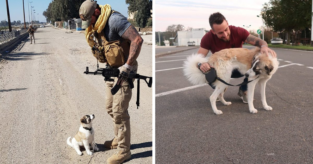 Former Soldier Is Reunited With Puppy He Rescued From Rubble In Syria, And It Is EMOTIONAL!
