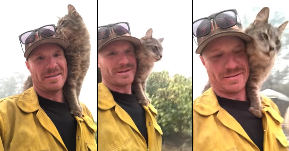 Firefighter Saves Cat From California Fires And Now It Won't Leave His Side  Copy
