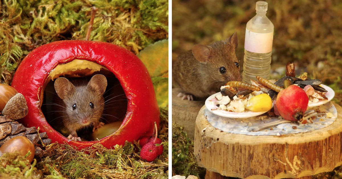 Man Finds A Family Of Mice In His Garden & Builds Them Their Own Tiny Village!