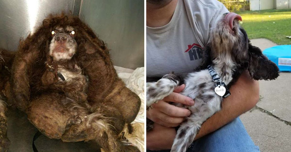 Abandoned Dog With Matted Fur Undergoes Incredible Transformation Thanks To Carers