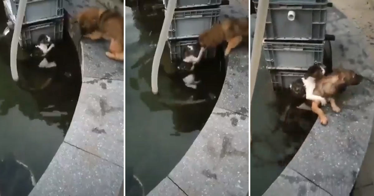 Watch The Incredible Moment That A Young Dog Saves A Cat From Drowning