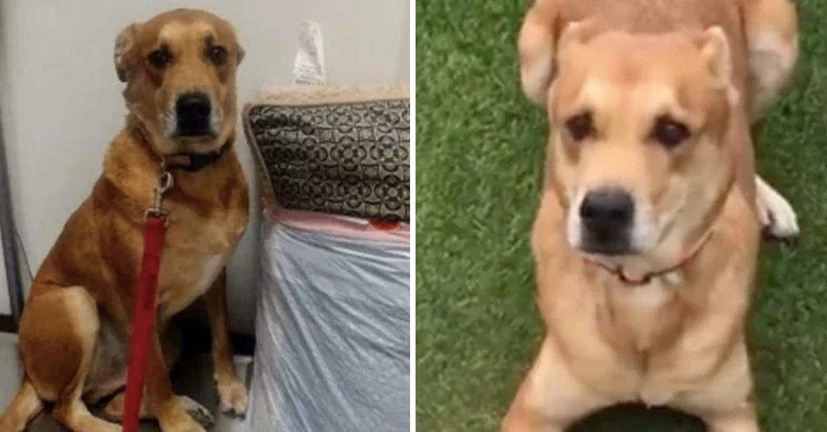 Heartbreaking: Dog Returned To Shelter Along With His Bed And Favorite Toys
