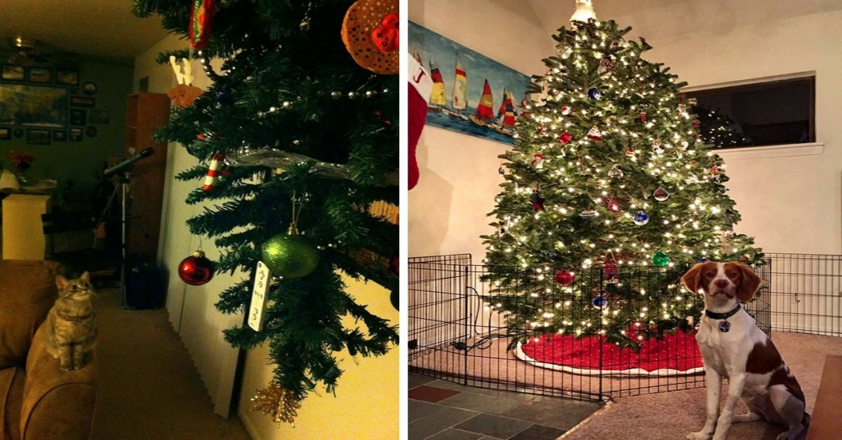 18 Genius Human Hacks To Protect Your Christmas Tree From Your Devil Pets!