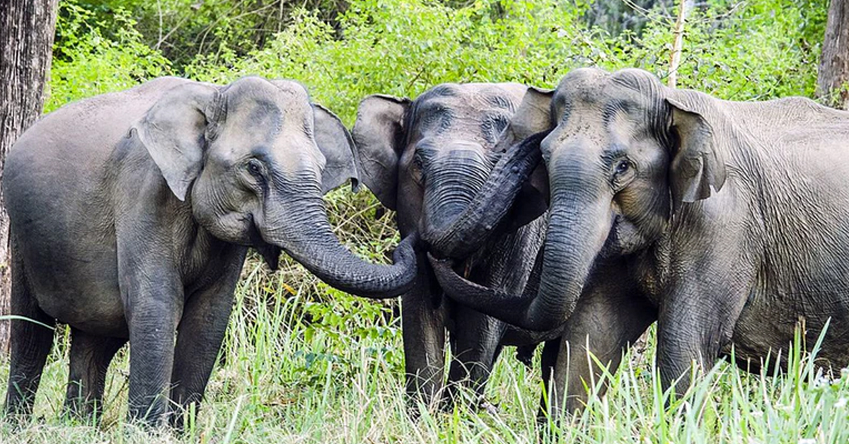 India Has Opened The World's First Dedicated Elephant Hospital