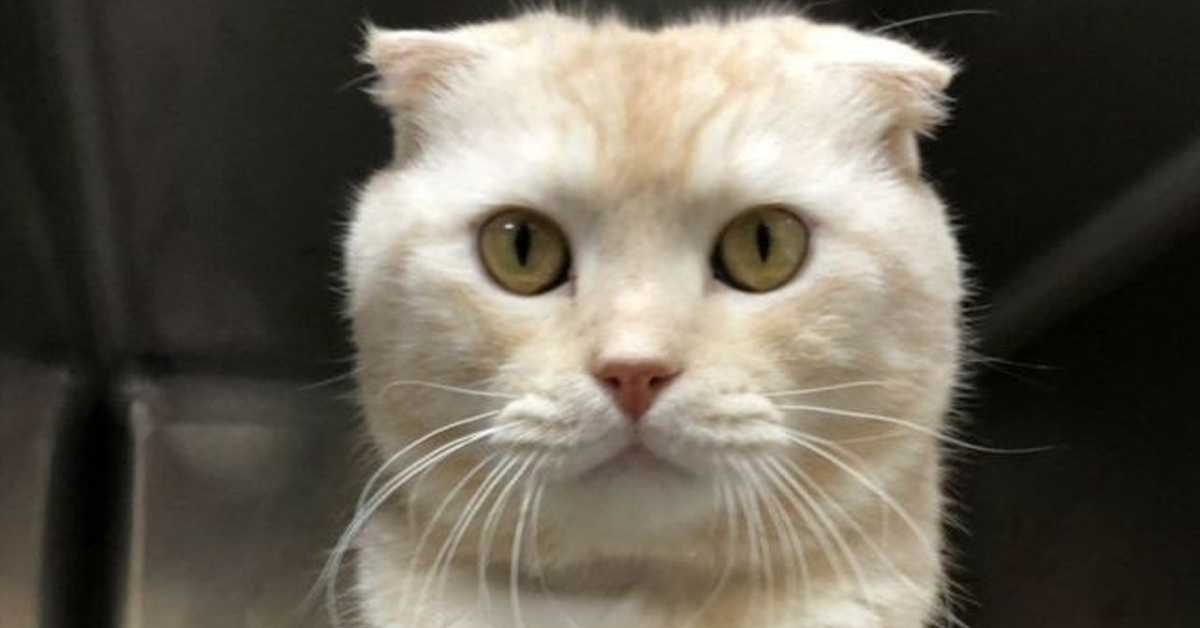 Man Fined $2000 For Sending A Cat To An Animal Shelter – Through The Mail