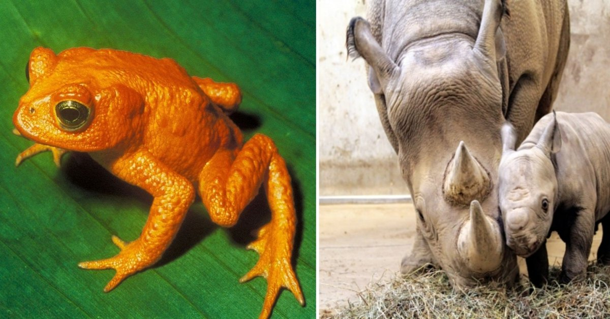 15 Animal Species That Are Now Extinct (Mainly Thanks To Us Humans)