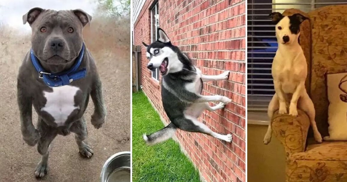 18 Times Dogs Failed At Being Dogs And Its Hilarious
