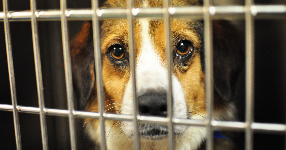 New Anti-Breeder California Law Means That Pet Stores Can Only Sell Rescue Animals