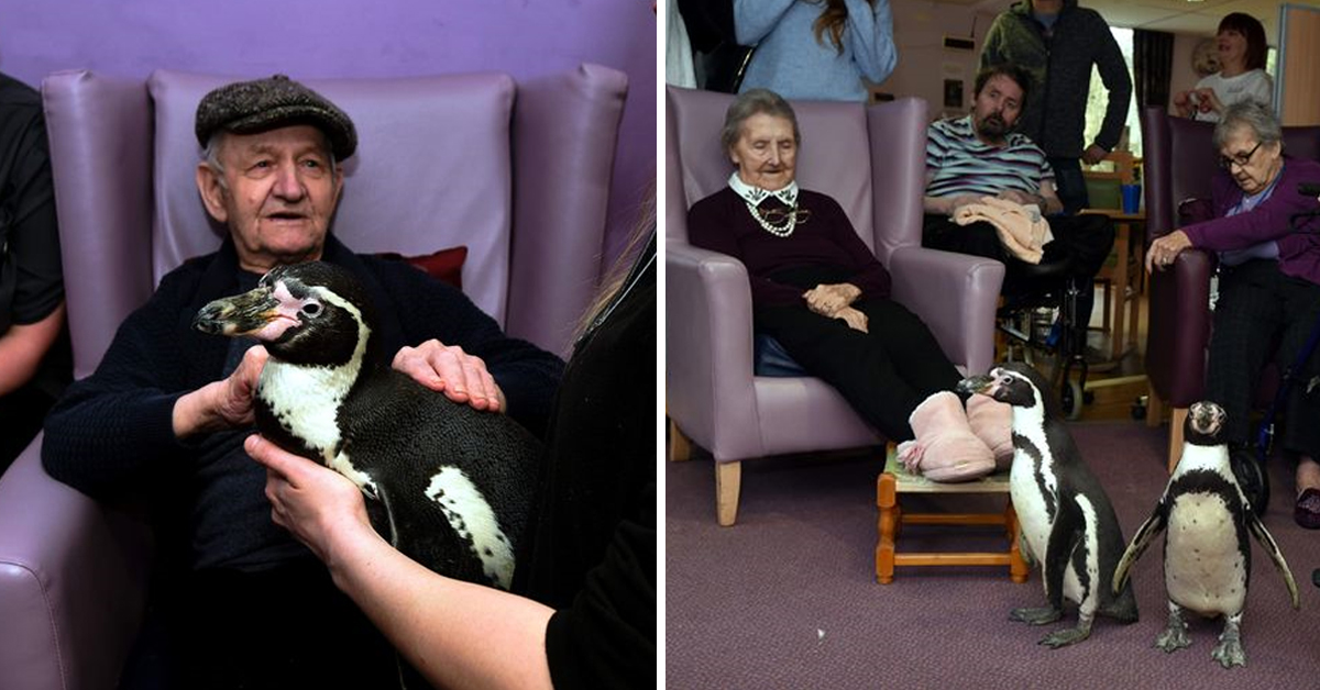 Care Home Residents Get Special Visit From Therapy PENGUINS