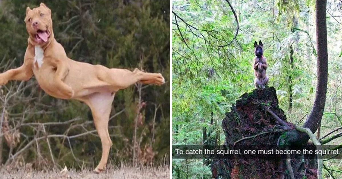 18 Times Dogs Failed At Being Dogs But Stole Our Hearts