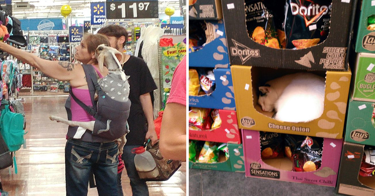 10+ Of The Strangest Things Spotted In Grocery Stores