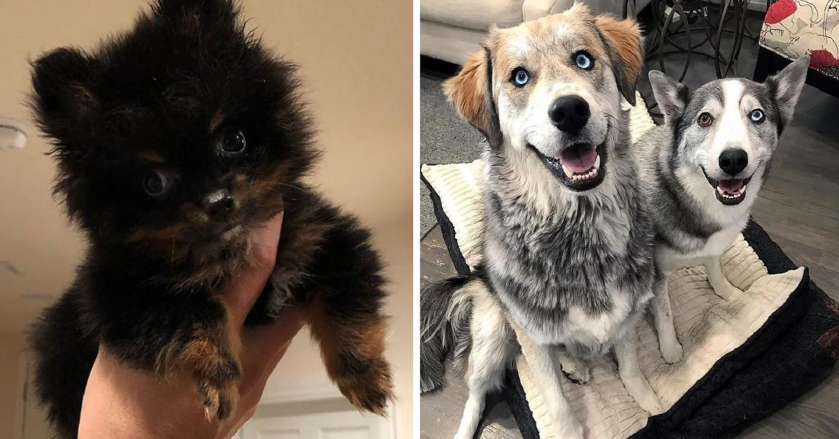 20 Dog Crossbreeds That Are UNFAIRLY Adorable