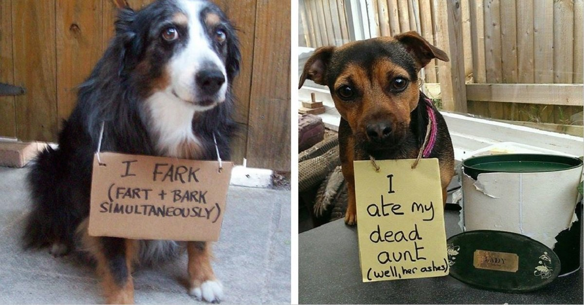 20 Dogs That Have Been Hilariously Shamed For What They've Done