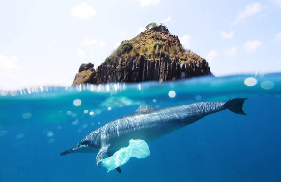 Study Finds That 100% Of The Sea Animals They Tested Had Ingested Plastic