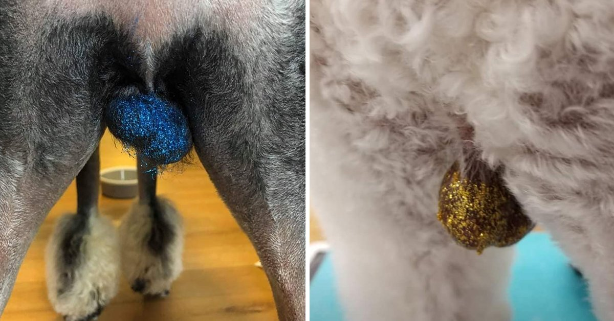 New Bizarre Grooming Trend Sees Owners Covering Their Dogs' Balls In Glitter