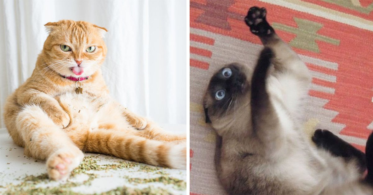 20 Feline Friends Who Found Catnip And Lost The Ability To Function
