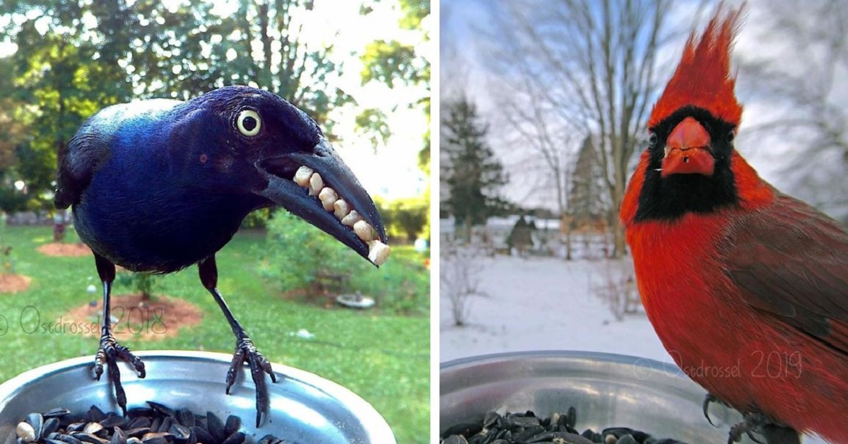 Woman Sets Up Bird Photo Booth With Incredible Results