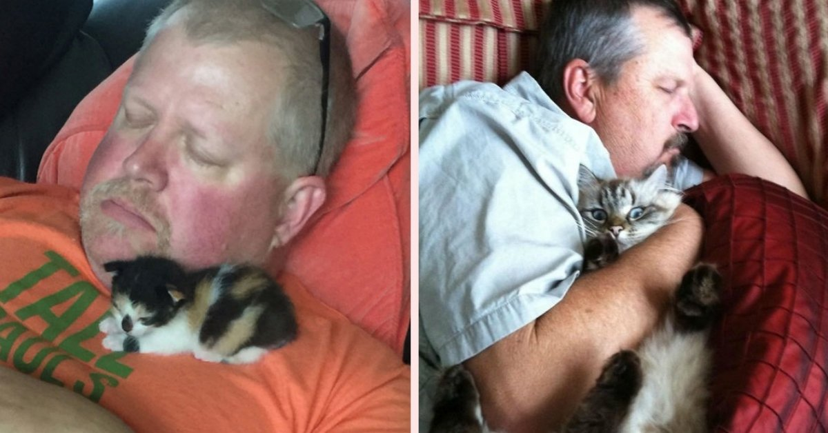 20 People Who REALLY, HONESTLY, DEFINITELY Didn't Want To Get A Cat