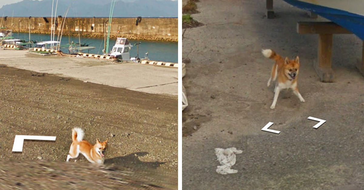 Dog In Japan Hilariously 'Ruins' Google Earth Photographs By Chasing After Google Street View Van