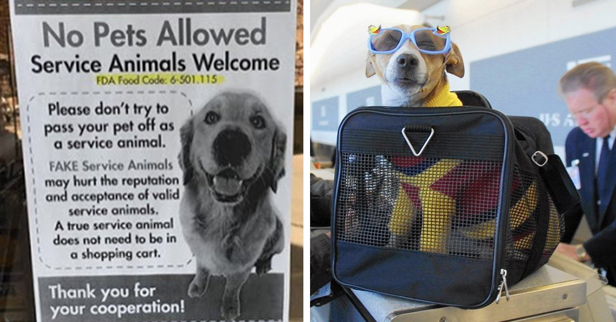 People Who Take 'Fake' Service Dogs On Planes Will Now Be Charged A Hefty Fine