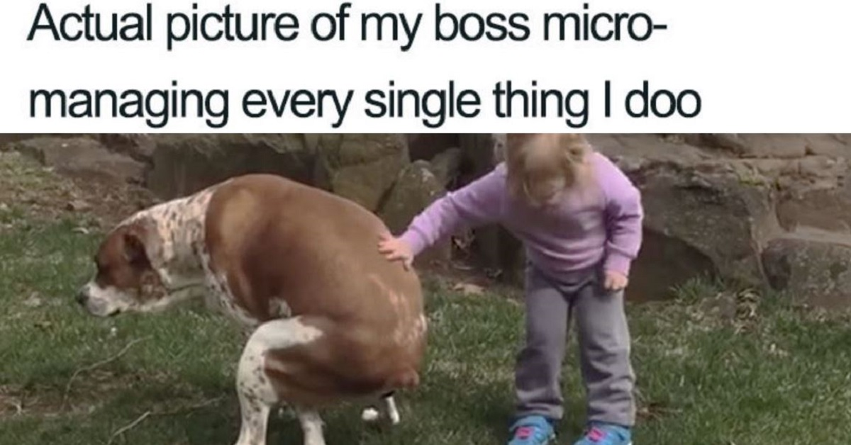 20 Of The Funniest Memes You Shouldn't Show Your Boss