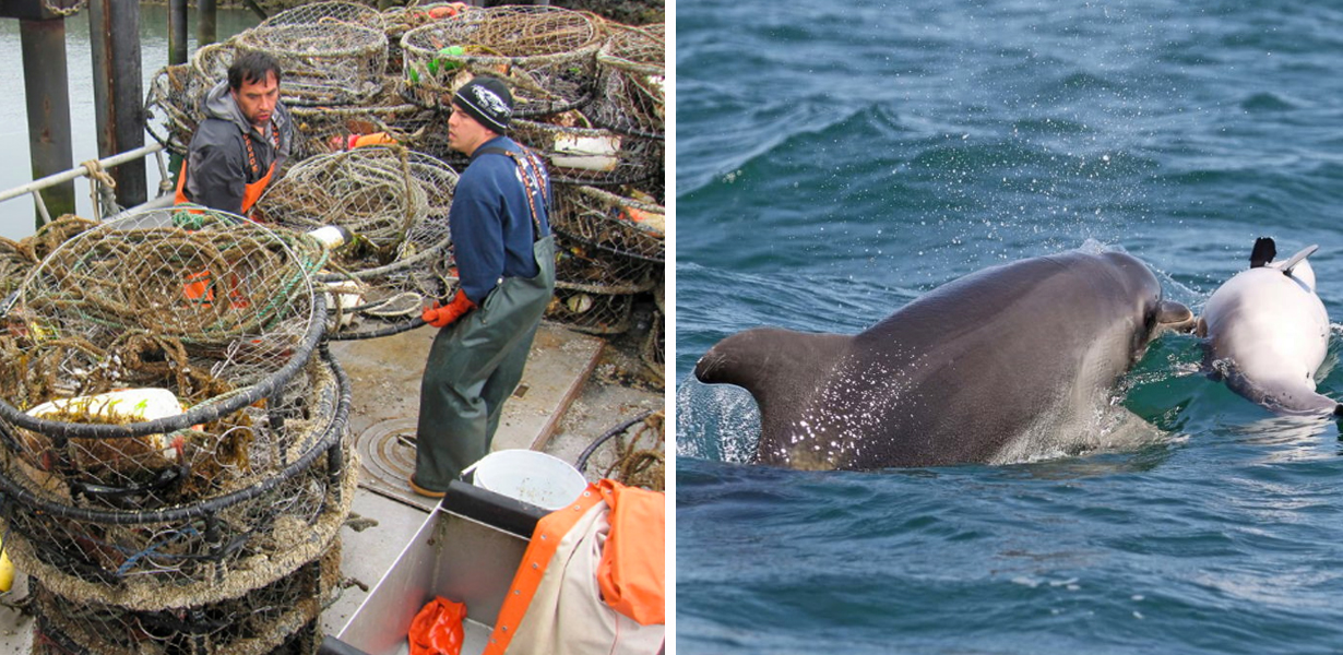 Tragic Photograph Emerges Of Dolphin Carrying Its Dead Calf After Being Caught In Man-made Trap