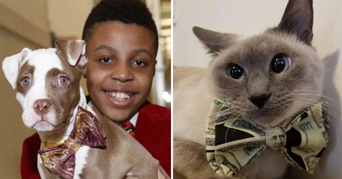 12-Year-Old Boy Makes Adorably Smart Bow Ties For Rescue Dogs To Help Them Get Adopted
