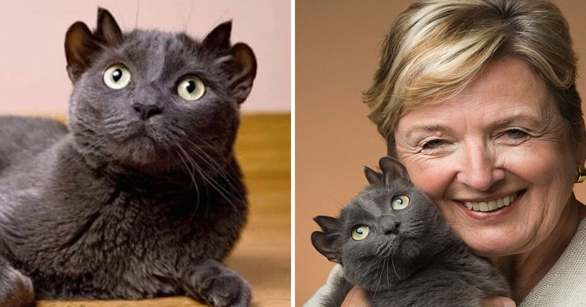 This Adorable Cat With Four Ears Is Called Yoda And He's Finally Found His Forever Family!