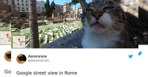 14 Of The Most Hilarious Cat Tweets To Grace The Internet