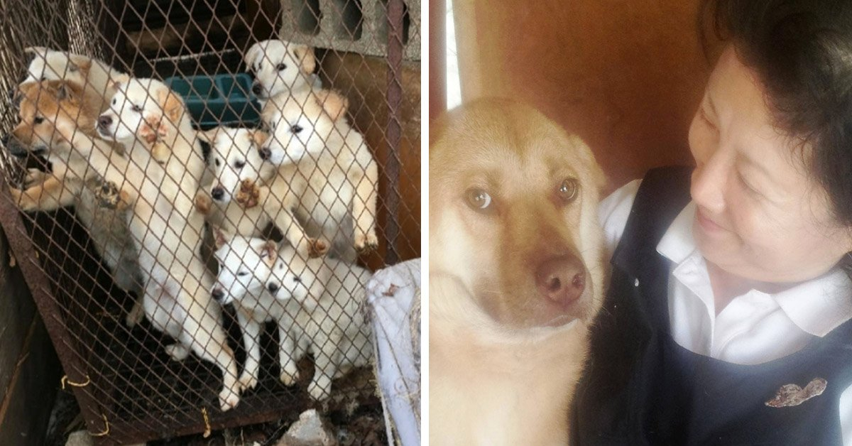 Heroic Woman Rescues Dogs From Meat Farm, Finding Them Happy Homes In USA