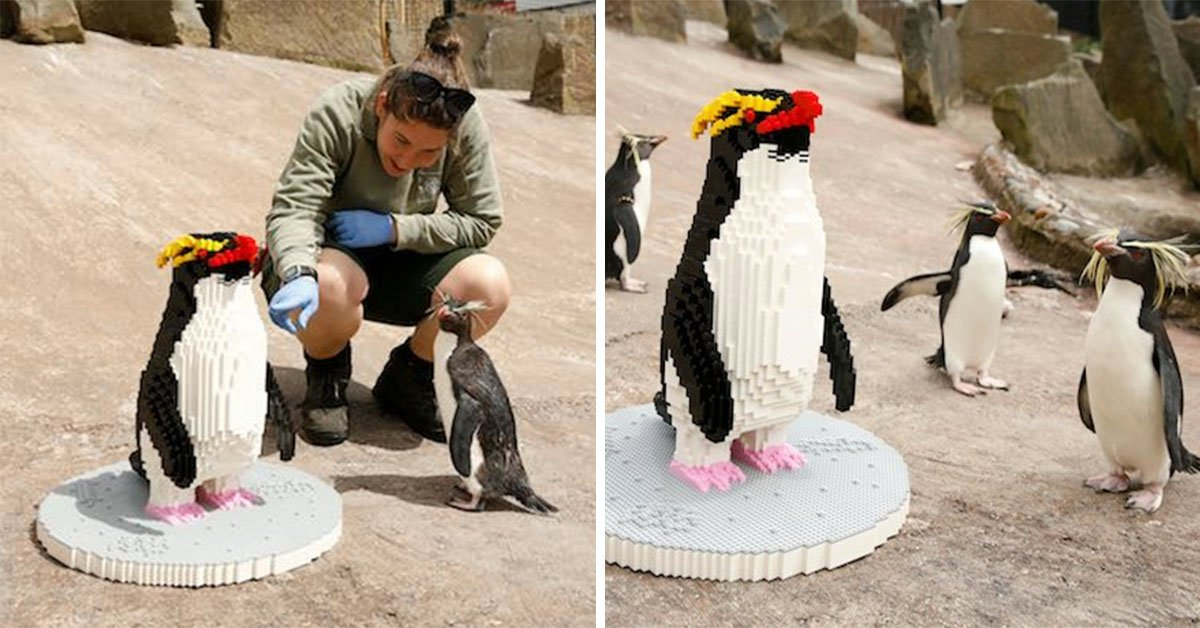 Zookeepers Capture The Moment These Adorable Penguins Met Their Lego Counterpart